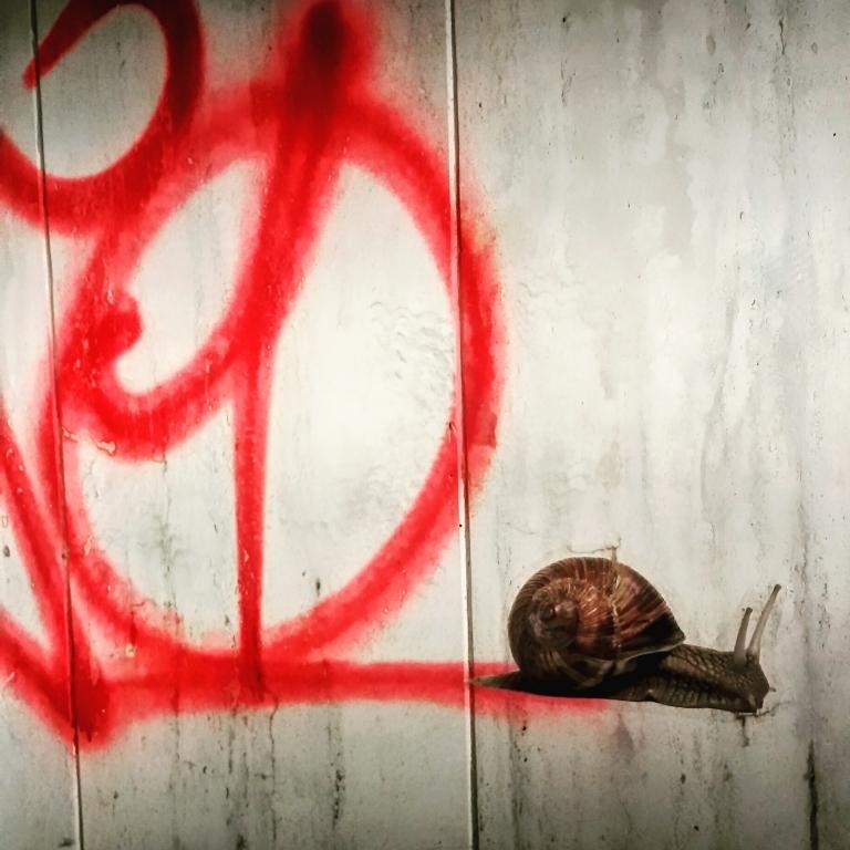 snail streetglobe